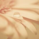 It is at the edge of a petal that love waits by lorrainem