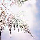 Leaf by Ulf Buschmann