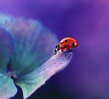 Ladybirds 2013 by Ellen van Deelen