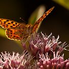 Butterflies of Portugal by César Torres