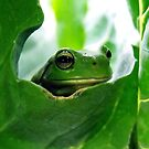 froggy peekaboo by Rebekah Kilpatrick