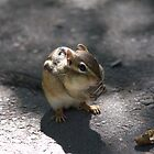 This chipmunk knew how to pull at my heart strings..LOL by NewfieKeith
