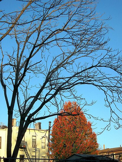 NEWS ALERT: Winter trees begin dominating Autumn!  by Alberto  DeJesus
