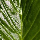Green Sheen by Rhoufi