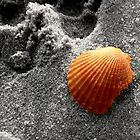 Shell on the Beach by Dottie11