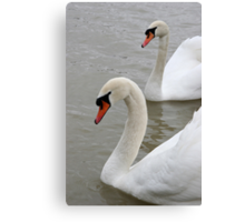 Swans in the lake Canvas Print