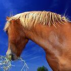 Friendly Horse III by Dottie11