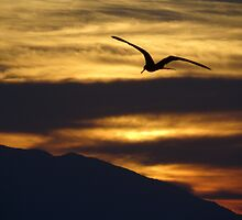 The night is coming the birds are going - La noche viene los pajaros regresan a sus lugares  by Bernhard Matejka