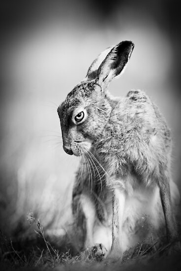 Dark Hare by Peter Denness