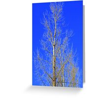 The tallest tree on the block Greeting Card