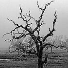 Dead Tree by Julia Ott