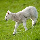 Spring Lamb by Margaret S Sweeny