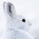 Snowshoe Hare by Martin Smart
