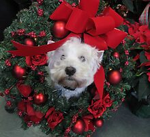 Westie Wreath by MarianBendeth