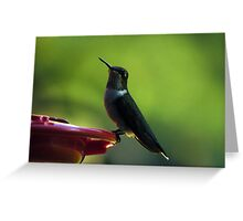 Female Ruby-Throated Hummingbird Greeting Card