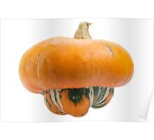 Orange pumpkin isolated on white background. Poster
