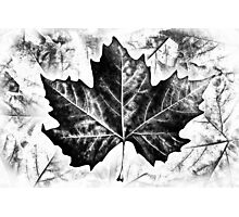 Winter Leaves Photographic Print