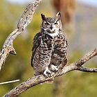 Great Horned Owl by levipie