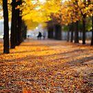 Automne au Jardin de Luxembourg by Peppedam