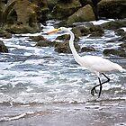 Egret on the Rocky Beach by joevoz