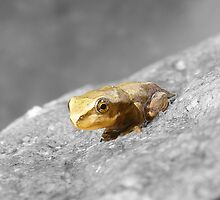 Little Froglet by Esther's Art and Photography