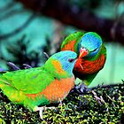 Lorikeet love by Arfan Habib