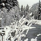Winter at the Nooksack River by lenslife