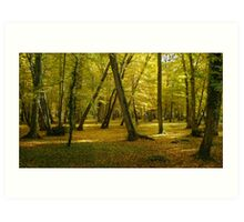 Autumn in the forest of Chenonceau Art Print