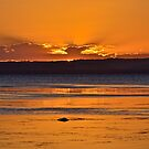 Golden Tuggerah Sunset. by Julie  White