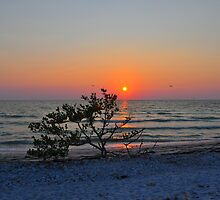 Sunset Over Small Tree on the Gulf of Mexico by joevoz