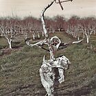 Sculpture in Orchard by Diane  Kramer