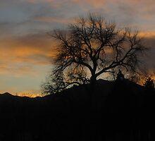 November Night In Colorado Springs #5 by dfrahm