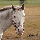 Arizona - NNEP Ottawa, ON by Tracey  Dryka