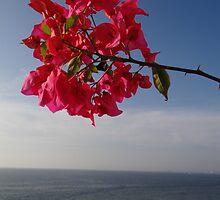 Blue ocean and red flower - Oceano azul y flor roja by Bernhard Matejka