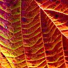 Leaf pattern 2 by Vasil Popov