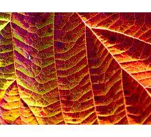 Leaf pattern 2 Photographic Print