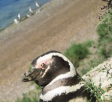 Puerto Madryn Penguin by SlenkDee