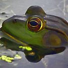 Frog in Pond by artstoreroom