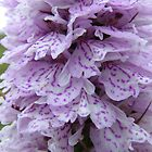 Heath Spotted Orchid by cuilcreations
