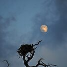 Bird Nest in the Moonlight  by joevoz