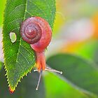 Snail on Rose Bush Leaf by joevoz
