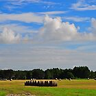 Hay Field  by joevoz