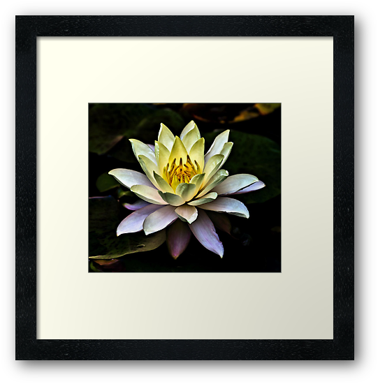 Golden Lotus by Sandra Moore