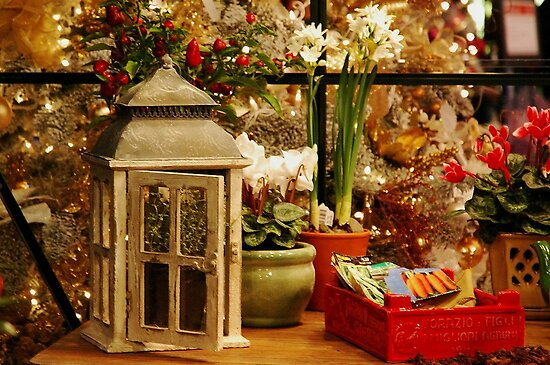 Christmas In the greenhouse by Marjorie Wallace