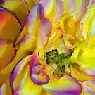 Watercolor Rose by Robin Lee