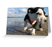 Louie at the bay Greeting Card