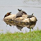 Turtles on the Rock by Sherri Fink