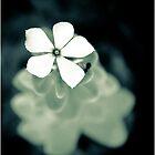 flower by Siju Doniston