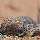 Grumpy the Central Bearded Dragon by Haggiswonderdog