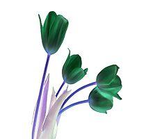 Tulips by Jarede Schmetterer